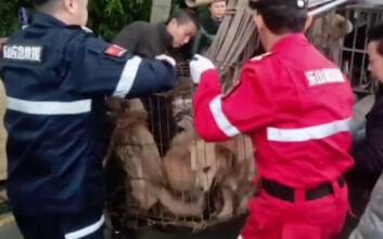 Τα δεκάδες σκυλιά σε κλουβιά περίμεναν τη σφαγή «για να γίνουν λουκάνικα»