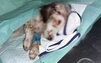 Κτηνωδία στα Χανιά: Πυροβόλησαν κουτάβια και τα έβαλαν σε σακούλα σκουπιδιών