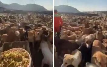 Να πώς είναι να ταΐζεις 2.000 σκυλιά τη μέρα