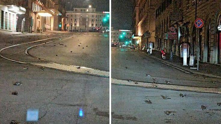 dead birds rome street new year fireworks