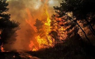 Τουρκία: Στους 6 οι νεκροί από τις δασικές πυρκαγιές – Εκκενώθηκαν σπίτια και ξενοδοχεία στο Μπόντρουμ