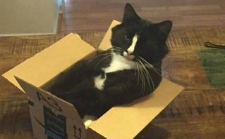 Αν έχεις κατοικίδιο μια γάτα, τότε ξέρεις