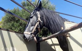Πρόστιμο 30.000 ευρώ για κακοποίηση αλόγου – Του έβγαλε την οπλή